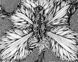 female-flower